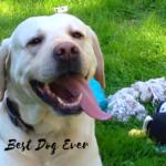Best Dog Ever…. Buck-a-roo