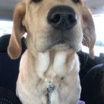 Meet Dakota Our New Pup